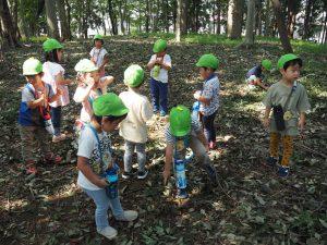 森の中では、ドングリ、落ち葉、枝、ダンゴムシなど、いろいろなものが見つかります。