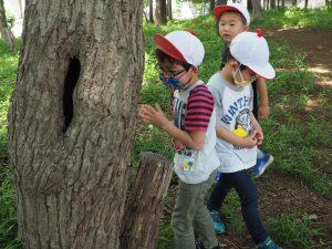 木の真ん中に穴が開いて、向こう側が見えるよ☆